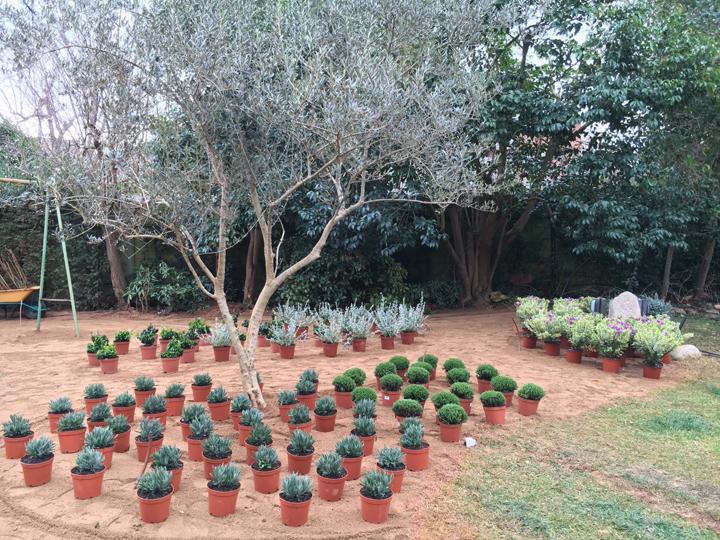 Jardín de De Buena Planta para una vivienda en Sant Cugat