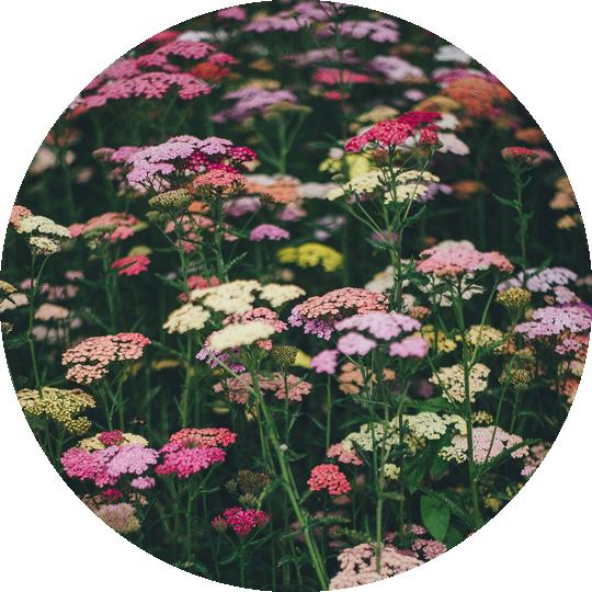 diseno-jardines-de-buena-planta-2