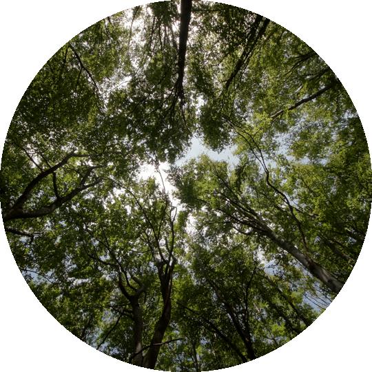 impacto-ambiental-de-buena-planta-1