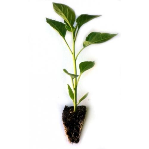 Minihort, un taller de horticultura para los más pequeños por De Buena Planta