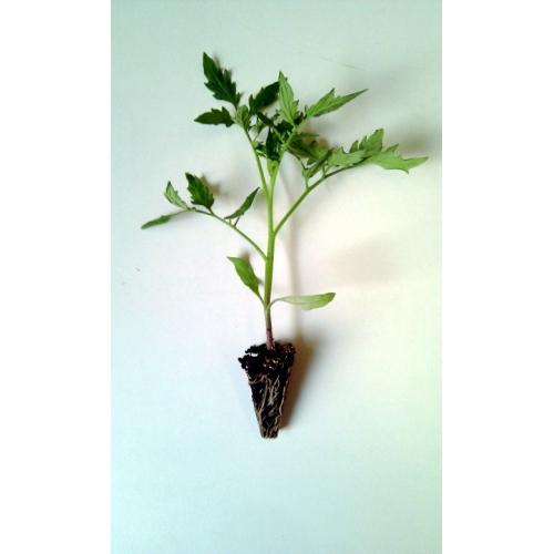 Minihort, un taller de horticultura para niños por De Buena Planta