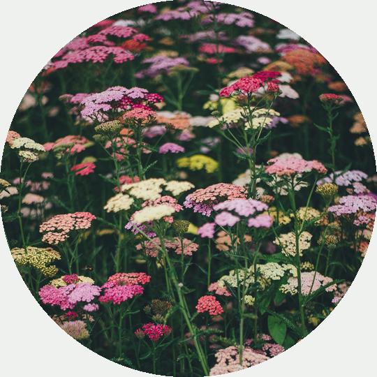 diseno-jardines-de-buena-planta-2-fondo