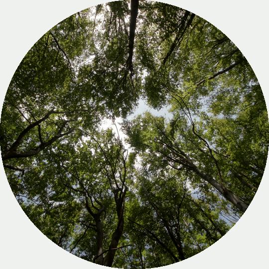 impacto-ambiental-de-buena-planta-1-fondo