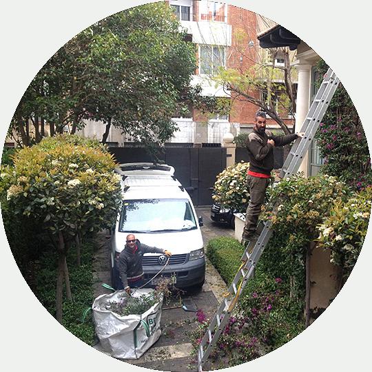 mantenimientos-jardines-de-buena-planta-redonda-fondo